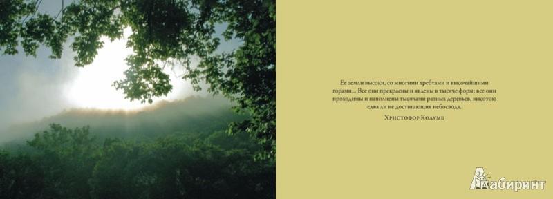 Иллюстрация 1 из 24 для Первозданный лес. Все краски мира - Marisa Iollonardo | Лабиринт - книги. Источник: Лабиринт
