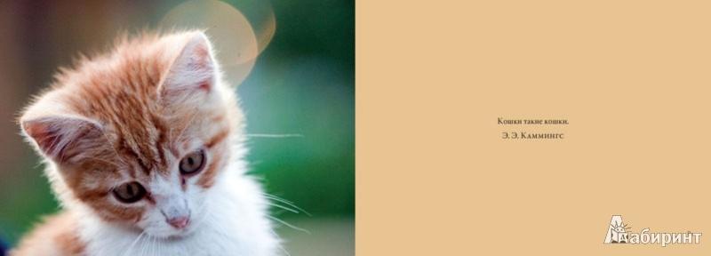 Иллюстрация 1 из 3 для Кошки. Красивые и независимые - Mary Aveni   Лабиринт - книги. Источник: Лабиринт