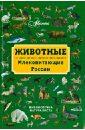 Бабенко Владимир Григорьевич Животные. Млекопитающие России
