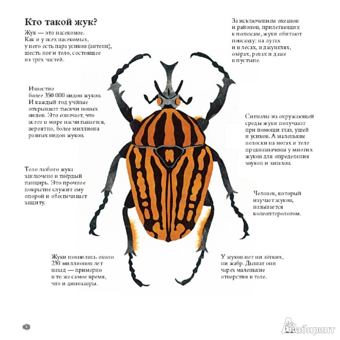 Иллюстрация 1 из 47 для В мире жуков. Интересные факты о животных - Стив Дженкинс | Лабиринт - книги. Источник: Лабиринт
