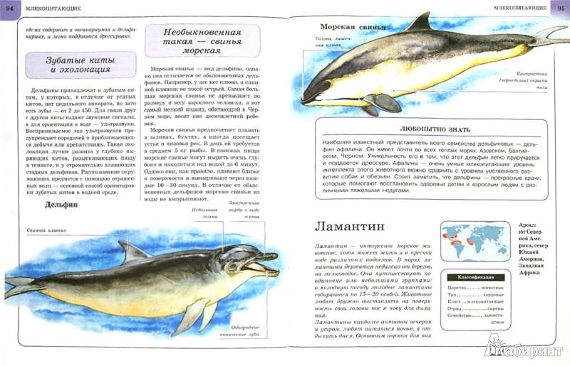 Иллюстрация 1 из 31 для Животные | Лабиринт - книги. Источник: Лабиринт