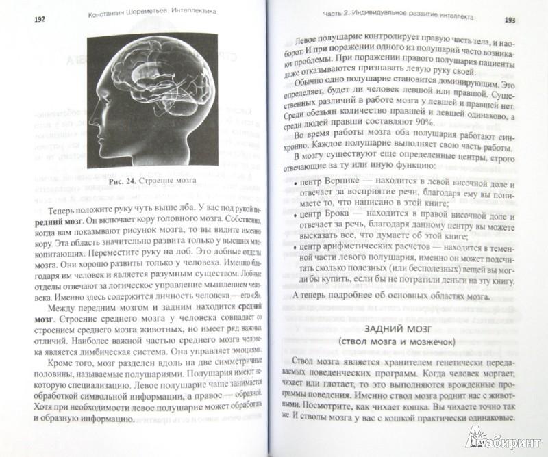 Иллюстрация 1 из 2 для Интеллектика. Как работает ваш мозг - Константин Шереметьев | Лабиринт - книги. Источник: Лабиринт