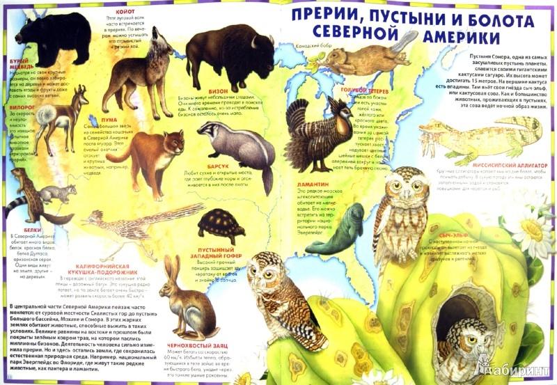 Иллюстрация 1 из 49 для Атлас животного мира | Лабиринт - книги. Источник: Лабиринт