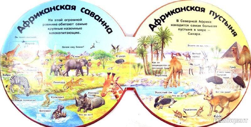 Иллюстрация 1 из 19 для Дикие животные. Вопросы и ответы | Лабиринт - книги. Источник: Лабиринт