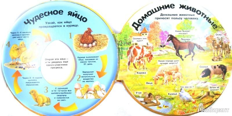 Иллюстрация 1 из 30 для Животные в деревне. Вопросы и ответы | Лабиринт - книги. Источник: Лабиринт