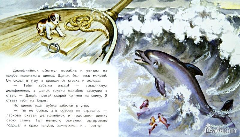 Иллюстрация 1 из 17 для Дельфиненок и чайка - Елена Ермолова | Лабиринт - книги. Источник: Лабиринт