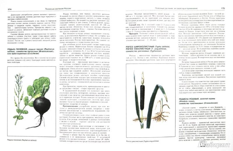 Иллюстрация 1 из 16 для Лекарственные растения. Иллюстрированный атлас - Николай Сафонов   Лабиринт - книги. Источник: Лабиринт