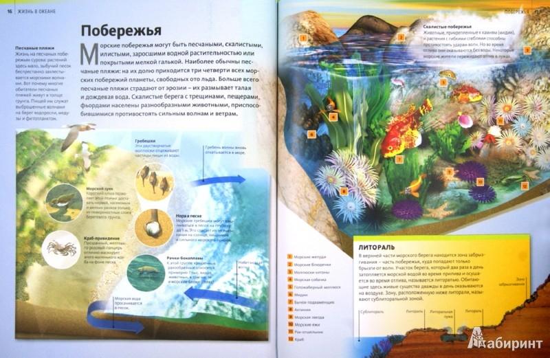 Иллюстрация 1 из 21 для Жизнь в океане | Лабиринт - книги. Источник: Лабиринт