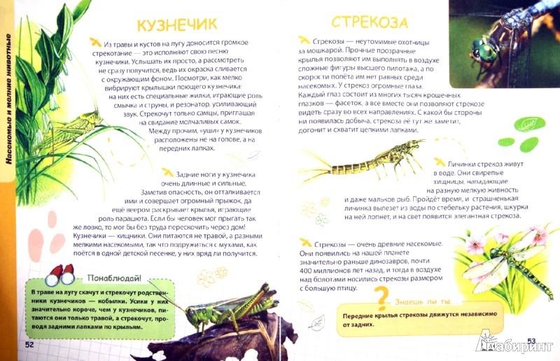 Иллюстрация 1 из 30 для Животные - Ирина Травина | Лабиринт - книги. Источник: Лабиринт