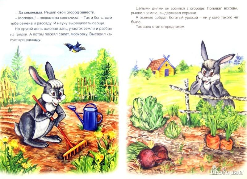 Иллюстрация 1 из 14 для Лесной огород | Лабиринт - книги. Источник: Лабиринт
