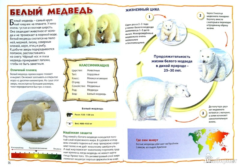 Иллюстрация 1 из 21 для Энциклопедия животных для маленьких почемучек | Лабиринт - книги. Источник: Лабиринт