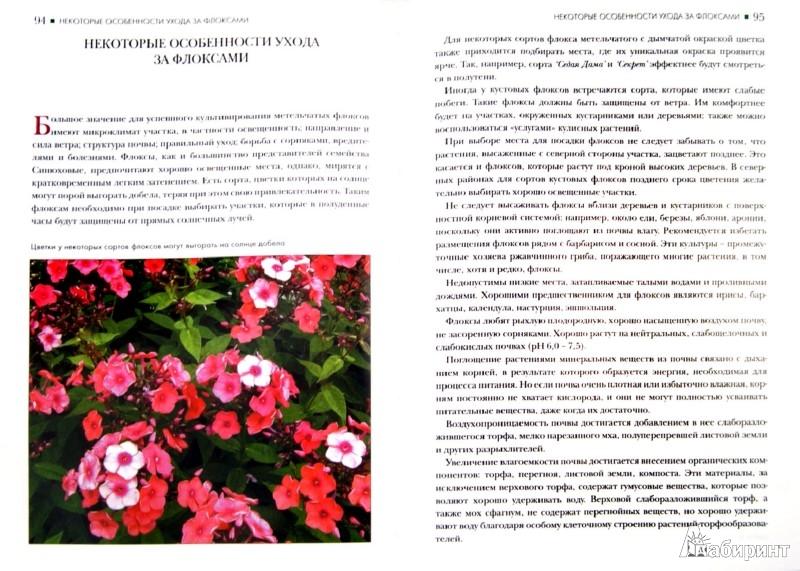 Иллюстрация 1 из 6 для Флоксы метельчатые - Игорь Матвеев | Лабиринт - книги. Источник: Лабиринт