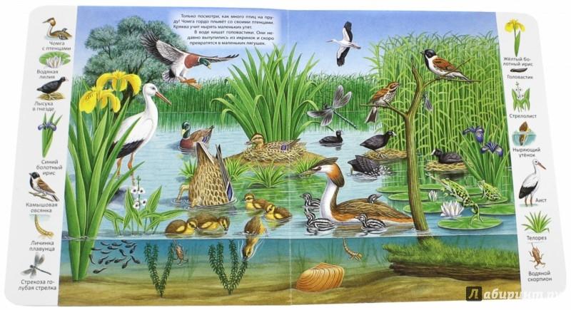 Иллюстрация 1 из 29 для В пруду и у реки | Лабиринт - книги. Источник: Лабиринт