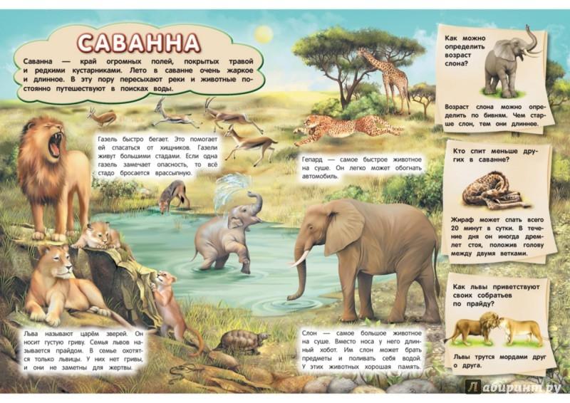 Иллюстрация 1 из 7 для Дикие животные - Анатолий Валаханович   Лабиринт - книги. Источник: Лабиринт