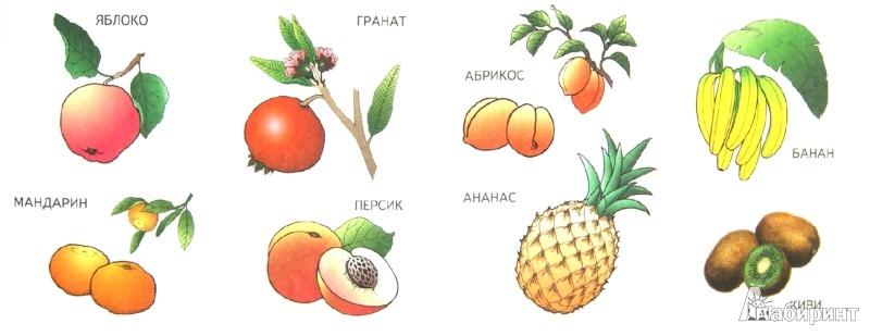 Иллюстрация 1 из 11 для Фрукты | Лабиринт - книги. Источник: Лабиринт