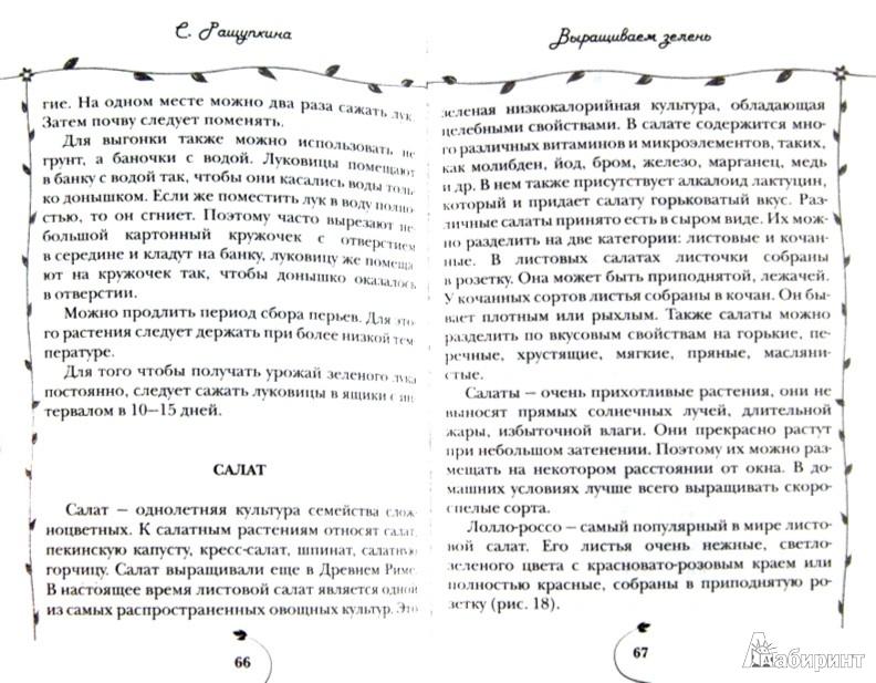Иллюстрация 1 из 7 для Огород на подоконнике. Чудо-урожай круглый год - Светлана Ращупкина   Лабиринт - книги. Источник: Лабиринт
