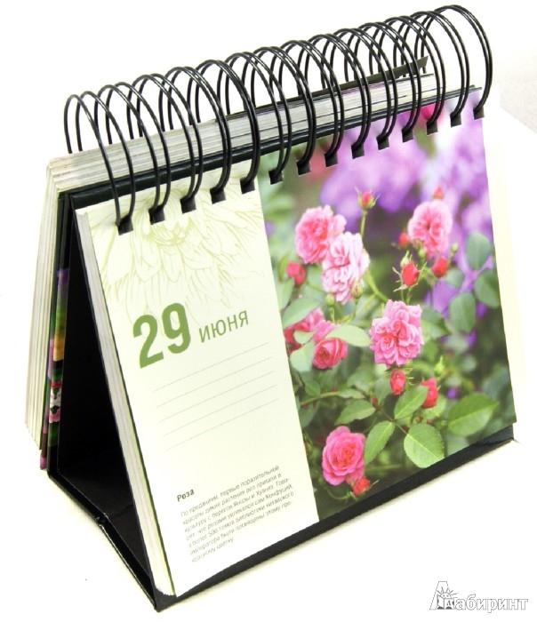 Иллюстрация 1 из 2 для Прекрасные цветы. Шедевры природы на каждый день. Календарь универсальный - Фомина, Лацис   Лабиринт - сувениры. Источник: Лабиринт