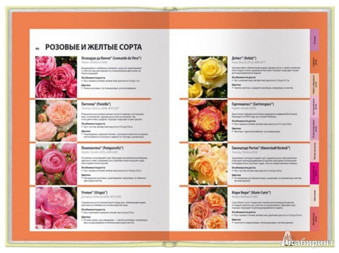 Иллюстрация 1 из 4 для Все о розах - Томас Пролль | Лабиринт - книги. Источник: Лабиринт