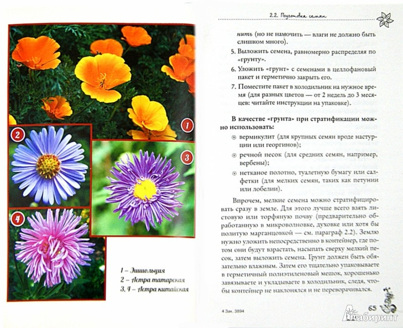 Иллюстрация 1 из 5 для Рассада. Лучше, чем у всех. Секреты, хитрости, подсказки умного садовода - Лариса Вергиз | Лабиринт - книги. Источник: Лабиринт