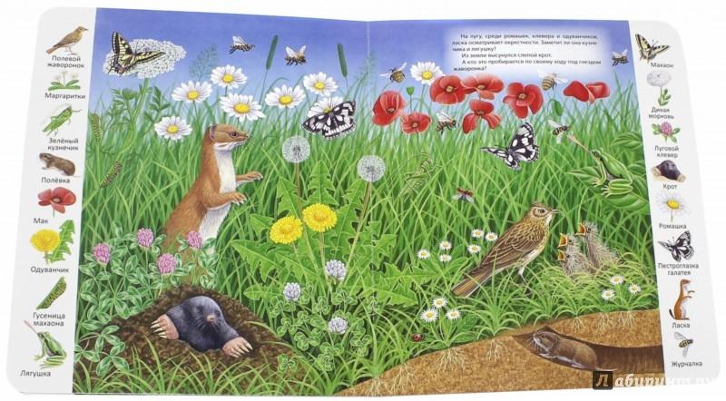 Иллюстрация 1 из 45 для На лугу и в поле | Лабиринт - книги. Источник: Лабиринт