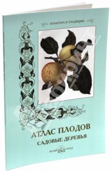 Атлас плодов. Садовые деревья casio g shock g classic ga 100a 7a