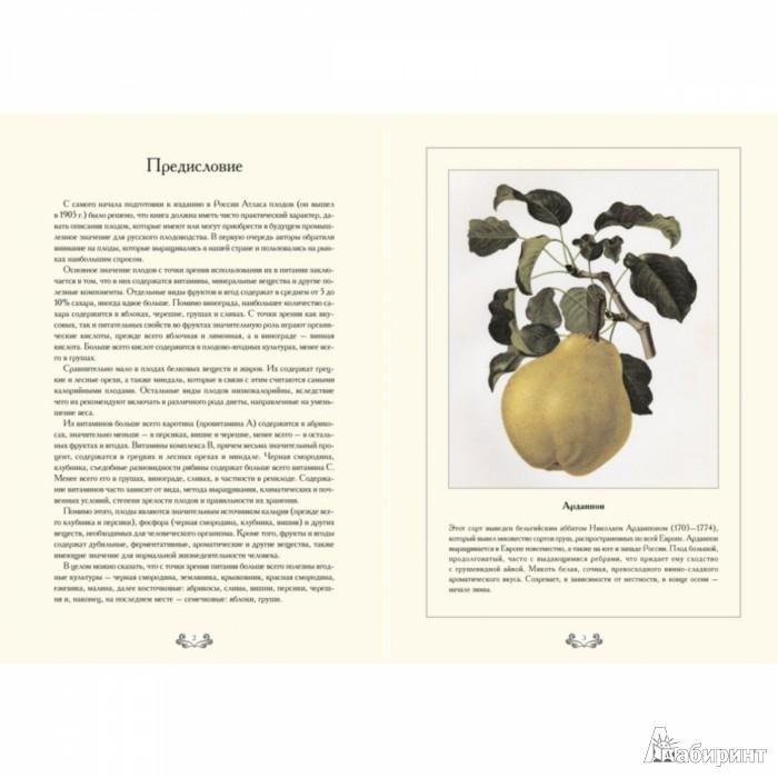Иллюстрация 1 из 10 для Атлас плодов. Садовые деревья - С. Иванов   Лабиринт - книги. Источник: Лабиринт