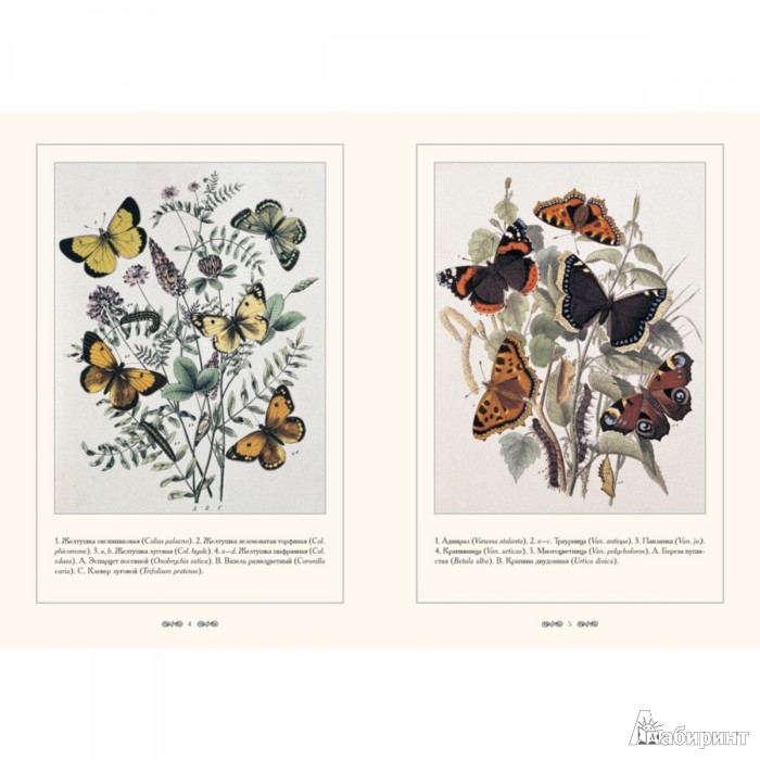 Иллюстрация 1 из 10 для Бабочки Европы | Лабиринт - книги. Источник: Лабиринт