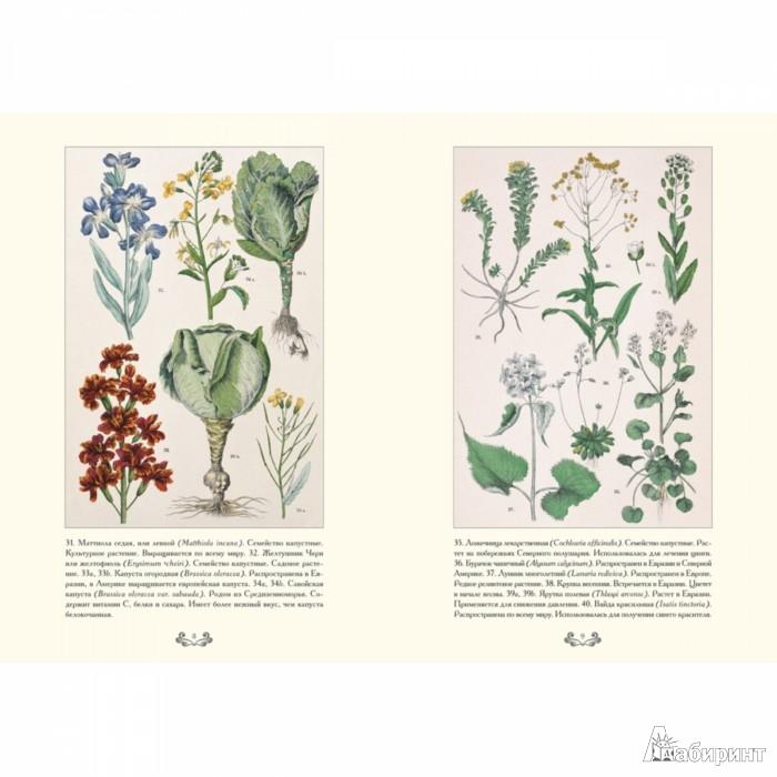Иллюстрация 1 из 10 для Ботанический атлас. Карл фон Гофман - Готман фон | Лабиринт - книги. Источник: Лабиринт