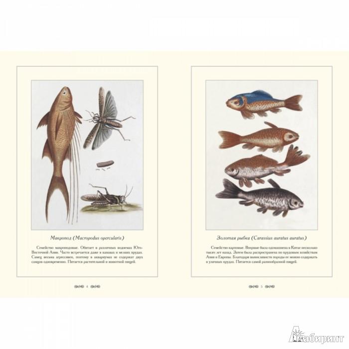 Иллюстрация 1 из 10 для Зоологический альбом - С. Иванов | Лабиринт - книги. Источник: Лабиринт