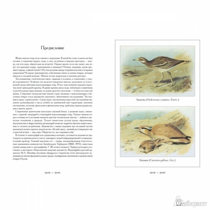 Иллюстрация 1 из 10 для Охотничьи и промысловые птицы Европейской | Лабиринт - книги. Источник: Лабиринт