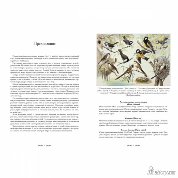 Иллюстрация 1 из 10 для Полезные и вредные птицы - В. Дуванов   Лабиринт - книги. Источник: Лабиринт