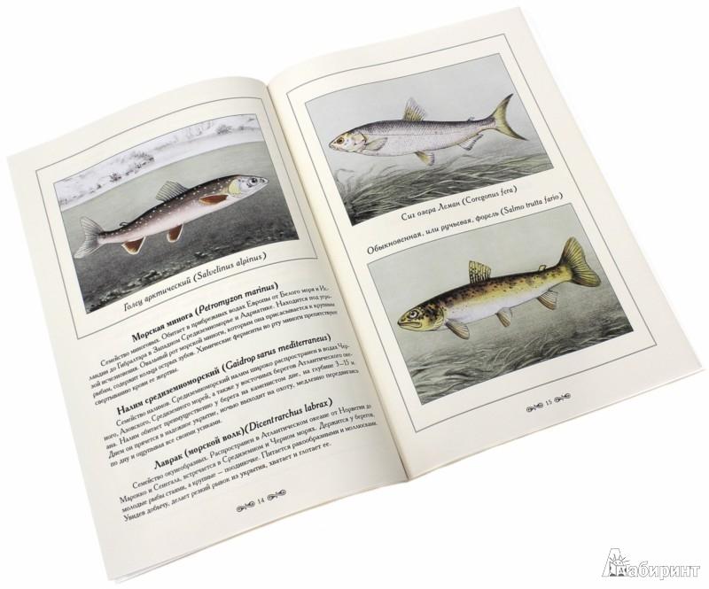 Иллюстрация 1 из 2 для Рыбы и рыбалка - Де Ла Бланшер Антри | Лабиринт - книги. Источник: Лабиринт