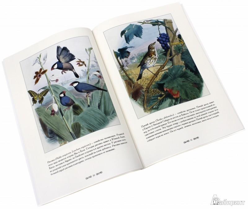 Иллюстрация 1 из 11 для Самые красивые птицы - С. Иванов | Лабиринт - книги. Источник: Лабиринт