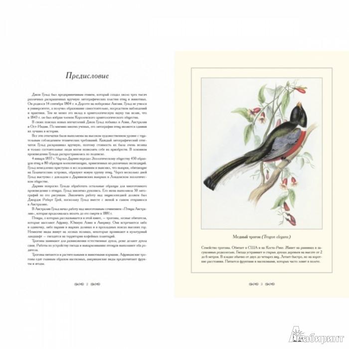 Иллюстрация 1 из 8 для Трогоновые. Иллюстрации Дж. Гульда - Джон Гульд | Лабиринт - книги. Источник: Лабиринт