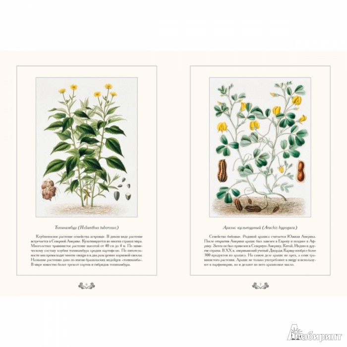 Иллюстрация 1 из 10 для Царство растений - С. Иванов | Лабиринт - книги. Источник: Лабиринт