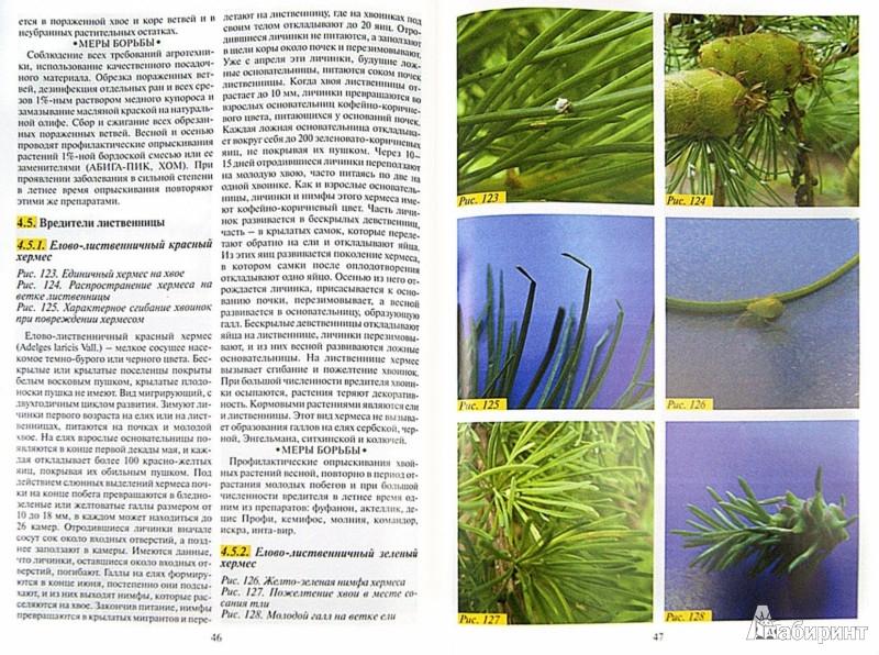 Иллюстрация 1 из 9 для Болезни и вредители хвойных растений. Атлас-определитель - Любовь Трейвас | Лабиринт - книги. Источник: Лабиринт