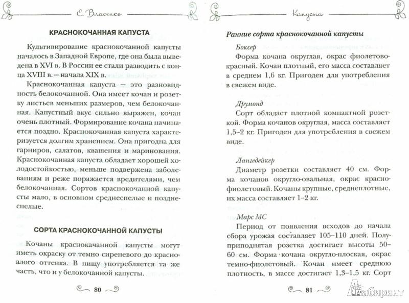 Иллюстрация 1 из 6 для Самые урожайные сорта любимых овощей - Елена Власенко | Лабиринт - книги. Источник: Лабиринт