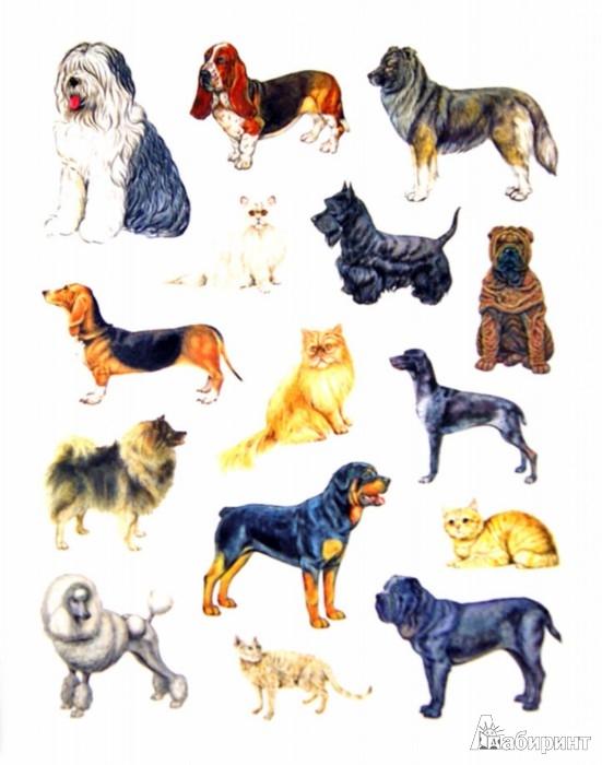 Иллюстрация 1 из 22 для Большая книга развивающих наклеек. Кошки и собаки | Лабиринт - книги. Источник: Лабиринт