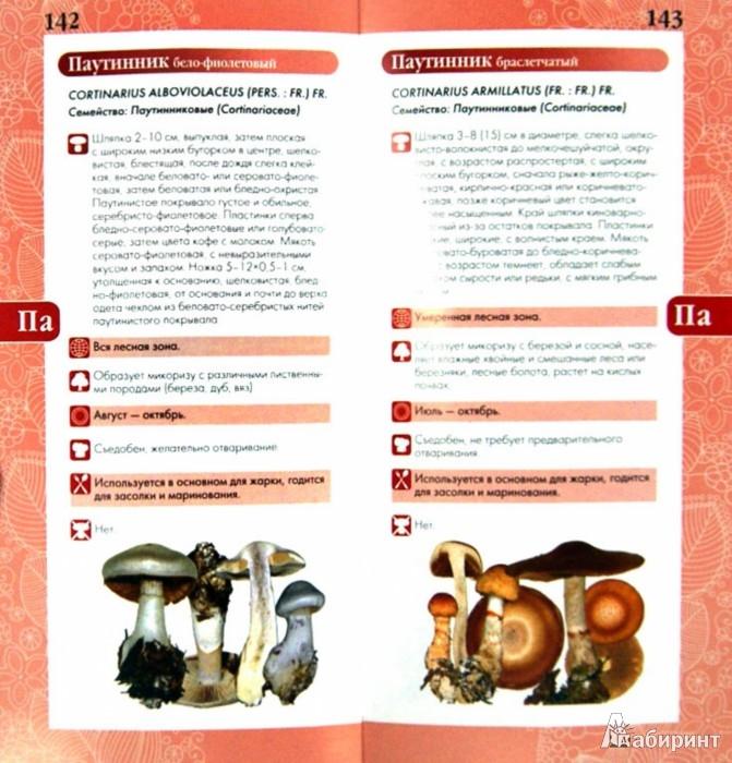 Иллюстрация 1 из 13 для Грибы. Мини-эксперт - Михаил Вишневский   Лабиринт - книги. Источник: Лабиринт