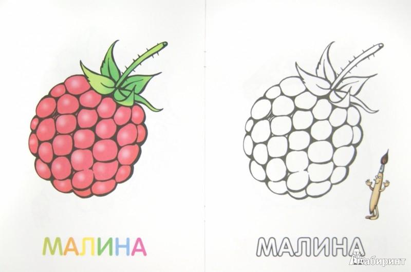 Иллюстрация 1 из 34 для Раскраска для малышей. Ягоды   Лабиринт - книги. Источник: Лабиринт