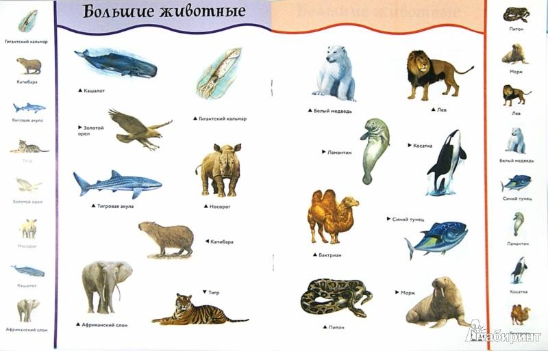 Иллюстрация 1 из 16 для Животные-великаны | Лабиринт - книги. Источник: Лабиринт