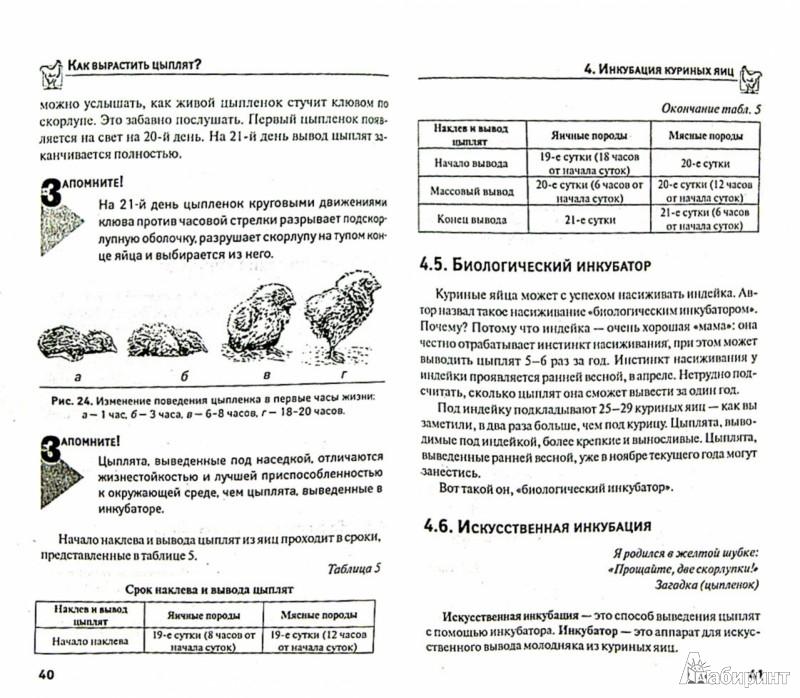 Иллюстрация 1 из 13 для Как вырастить цыплят? Школа птицевода - Юрий Седов | Лабиринт - книги. Источник: Лабиринт