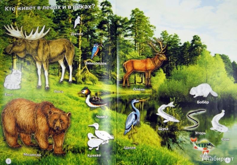 Иллюстрация 1 из 4 для На земле, в воде, в небе. Кто где живет? | Лабиринт - книги. Источник: Лабиринт