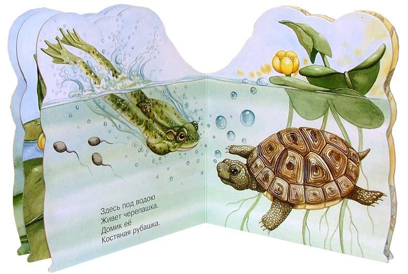 Иллюстрация 1 из 13 для Про лягушку. Зверята - В. Комаров | Лабиринт - книги. Источник: Лабиринт
