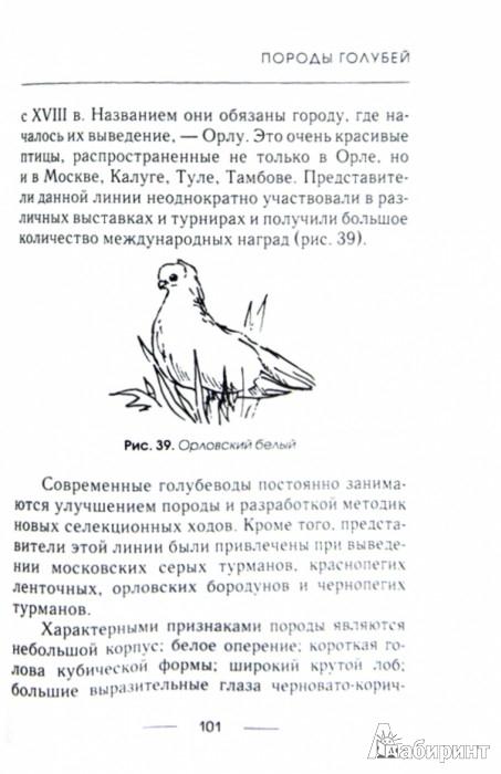 Иллюстрация 1 из 7 для Голуби - Евгений Степнов | Лабиринт - книги. Источник: Лабиринт
