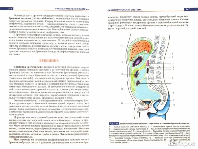 Иллюстрация 1 из 22 для Атлас анатомии человека. Учебное пособие для студентов учреждений среднего профессионального образ - Рудольф Самусев | Лабиринт - книги. Источник: Лабиринт