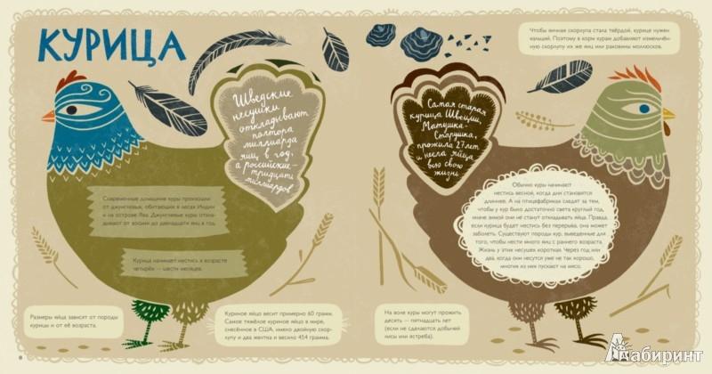 Иллюстрация 1 из 50 для Крутые факты о яйцах - Лена Шёберг | Лабиринт - книги. Источник: Лабиринт