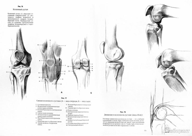 Иллюстрация 1 из 8 для Анатомический рисунок. Тело человека - Суньоги, Фехер | Лабиринт - книги. Источник: Лабиринт
