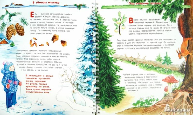 Иллюстрация 1 из 35 для Растения - Татьяна Елумеева | Лабиринт - книги. Источник: Лабиринт