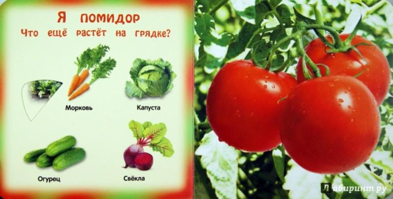 Иллюстрация 1 из 13 для Овощи и фрукты - Анна Прищеп   Лабиринт - книги. Источник: Лабиринт